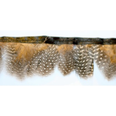 Guinea fowl Feather Fringe