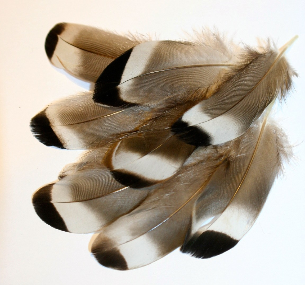 Bag Duck Quill Tipped Feathers