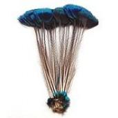 Peacock crona feathers