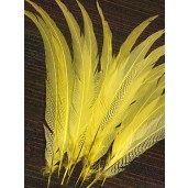 yellow dyed massive silver pheasant feathers