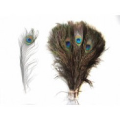 50 Peacock Feathers 10-12inch