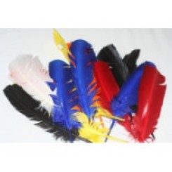Eagle Indian feathers
