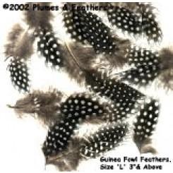 guinea fowl plumage