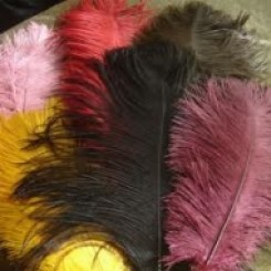 ostrich plume feather 12-14inch all colours