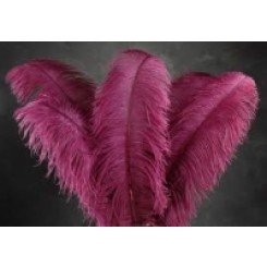 ostrich plume feather 22-24inch all colours