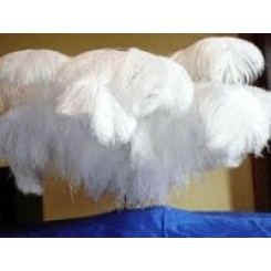 ostrich plume feather 24-26inch all colours