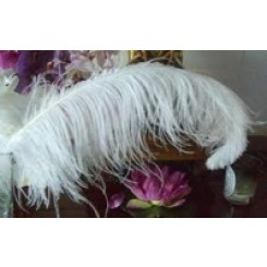 ostrich plume feather 26-28inch all colours